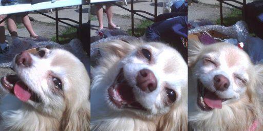 alegría perro